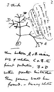 Darwin B Notebook Page 36