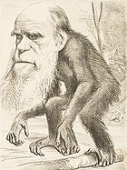 Darwin as an Ape Cartoon