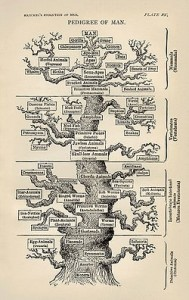 Tree of Life as depicted by Ernst Haeckel